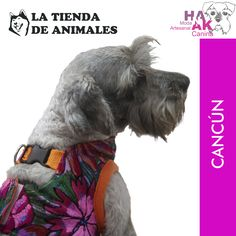 """Find our products in """"La tienda de Animales"""" Cancun, México.    Mayan embroidery, handmade dog clothing."""