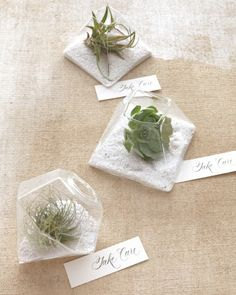 """Take-Home Terrariums Wedding Favor: Mini terrariums—fashioned by nesting air plants and succulents in white sand within bud vases—make great favors. Better yet, they can be assembled weeks in advance. Add watering instructions—and a sweet parting sentiment—on """"take care"""" cards."""