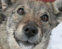Ask effectively solve the problem of abandoned dogs