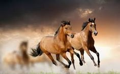 Image result for wild horses on the beach at sunset