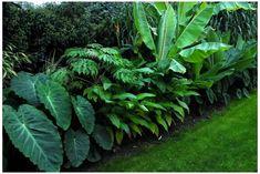Tropical Backyard Landscaping, Front Yard Landscaping, Florida Plants Landscaping, Landscaping Ideas, Backyard Ideas, Small Tropical Gardens, Tropical Plants, House Landscape, Garden Landscape Design