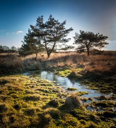 Kampina is in Winter full of Yellow, Blue, and Green colours. When the temperature drops bellow zero, the frozen water is beautufuly reflecting the sky. Green Colors, Netherlands, National Parks, Sky, River, Outdoor, The Nederlands, Heaven, Outdoors