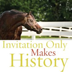 Invitation Only has passed Zippo Pine Bar as #AQHA's all-time leading sire by points earned. The team from Ohio Pineview Farms talks about this moment in #AQHA history in the December issue of The American Quarter Horse Journal. Download your digital copy at www.aqha.com/journal.
