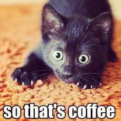 #Cats #Cat #Kittens #Kitten #Kitty #Pets #Pet #Meow #Moe #CuteCats #CuteCat #CuteKittens #CuteKitten #MeowMoe Adorable! ... http://www.meowmoe.com/10978/