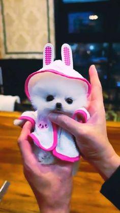 Everyone will Love this Cutey. Cute White Puppies, Cute Teacup Puppies, Cute Baby Puppies, Cute Animals Puppies, Super Cute Puppies, Cute Wild Animals, Baby Animals Super Cute, Baby Animals Pictures, Fluffy Animals