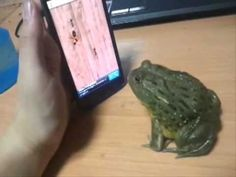 How to piss off a frog.  Trust me, this is the best 23 seconds of your life that doesnt have an asm at the end.