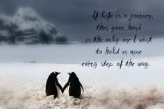 "Penguin Love Quotes Classy Penguins In Love Quotes ""penguin Love Philosophy"" Relationships"
