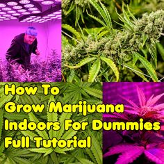 Facebook Twitter Pinterest RedditFriend=> Facebook Twitter Pinterest Reddit Every one of you that searched for this page, can learn for informational purposes that Cannabis can be grown easy, if you take into consideration certain key factos, but in other words, if you will stop being a lazy ass and try to read more than 2 …