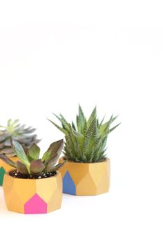 DIY Wooden Bracelet Planters - what a cool idea for those big bangles you don't wear anymore!