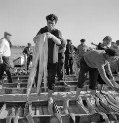Artur Pastor — Sesimbra, décadas de 50/60. Social Photography, Working People, Fish Art, Algarve, Photomontage, People Around The World, Lisbon, Black And White Photography, Old Photos