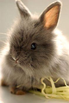 Sweet little bunny...love brown bunnies