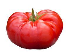 Heirloom Tomato Seeds, Tomatoes, Non-GMO, Untreated, Organic Seed – Sandia Seed Company Heirloom Tomato Seeds, Heirloom Tomatoes, Organic Nutrients, Beefsteak Tomato, Mango Fruit, Red Tomato, Organic Seeds, Organic Fertilizer, Tomato Plants