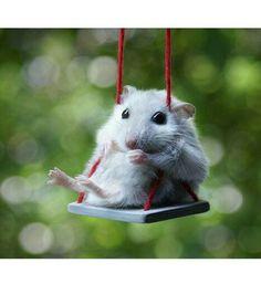 HamsterCuteness
