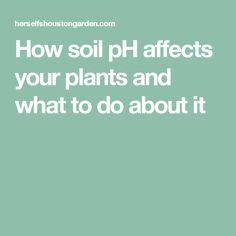 How soil pH affects your plants and what to do about it