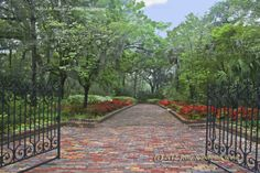 Springtime at Alfred B. Maclay Gardens State Park in Tallahassee, Florida. A masterpiece of floral architecture, the gardens feature a picturesque brick walkway, a secret garden, a reflection pool, a walled garden and hundreds of camellias and azaleas.  http://www.floridastateparks.org/maclaygardens/. Photo by Jerry Word, Mar. 27, 2005. Florida's Forgotten Coast.  www.facebook.com/debsrentals