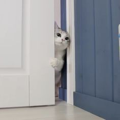 """Kitty Photo From """"Eve: """"Mommy……. The door is open, but I don't t. Funny Cat Photos, Funny Cats, The Door Is Open, Cats Of Instagram, Instagram Posts, Tall Cabinet Storage, Eve, Kitty, Little Kitty"""