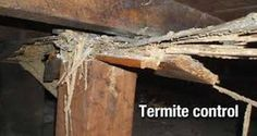 Let's face it: discovering that you have termites can be a distressing experience indeed. However, there are a variety of effective ways to prevent and treat termite infestations. When it comes to treating low scale infestations, for Types Of Bugs, Types Of Insects, Integrated Pest Management, Termite Inspection, Pulling Weeds, Termite Control, Pest Control Services, Citrus Oil