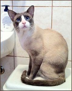 cat's ears - Google Search