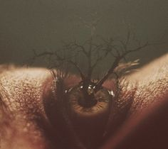 art, eye, and tree resmi