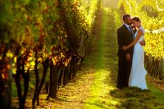 kumeu winnery by fantailphoto.com New Zealand, Wedding Photos, Dream Wedding, Wedding Dresses, Pictures, Marriage Pictures, Bride Dresses, Photos, Bridal Gowns