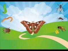 Hmyz - poznáváme hmyz a clenovce - kdo žije na louce 2. část - pro děti - YouTube Tinkerbell, Insects, Disney Characters, Fictional Characters, Bee, Disney Princess, School, Creative, Bees