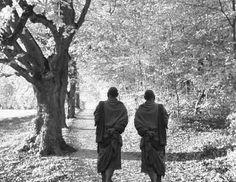 szerzetesek_erdoben