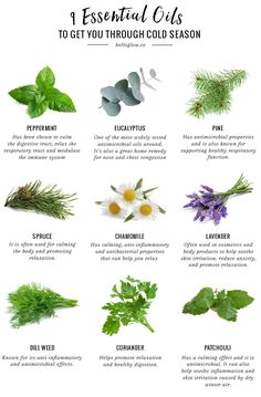 9 Essential Oils for the Cold Season remedies for anxiety remedies for sleep remedies high blood pressure remedies simple remedies sinus infection Healing Herbs, Medicinal Plants, Natural Healing, Herbal Remedies, Natural Remedies, Health Remedies, Oils For Sore Throat, Image Deco, Essential Oils For Colds