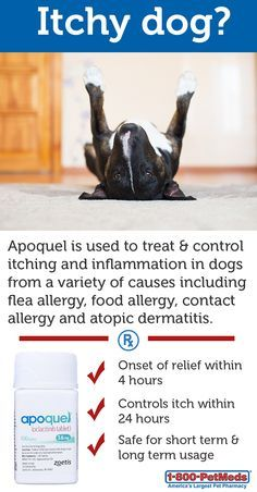 1000+ images about Atopic Dermatitis on Pinterest