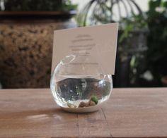 marimo miniature pet Moss aquarium place card by Marimoinabottle, $14.99