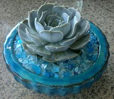 Most beautiful thing by Danielle Romero-Echeveria lilacina