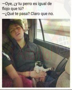 Flojo o muerto  hay una gran diferencia #humor #chistes #risas #memes #risasinmas Funny Spanish Memes, Spanish Humor, Memes Br, New Memes, Funny Quotes, Funny Memes, Hilarious, Qoutes, Sports Humor