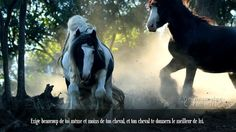 Exige beaucoup de toi même et moins de ton cheval, et ton cheval te donnera le meilleur de lui.