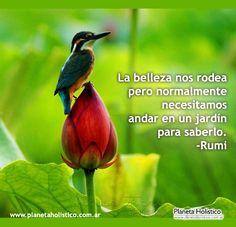 Frase de Rumi - La belleza nos rodea