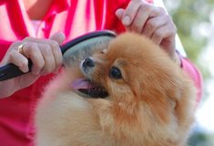 Love yappy little feeder dogs? Well, you've gotta read the top 10 Things You Should Know Before Owning a Pomeranian. Weight Loss Program, Weight Loss Plans, Right On Track, Bone Loss, Dog Diet, Bulldog, Take A Nap, Pomeranians, Pets