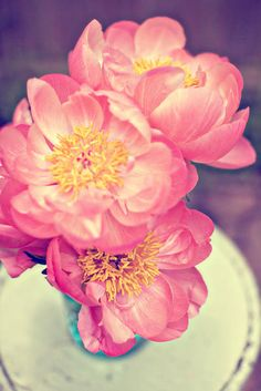 Coral Charm Peonies  Photographed by Katie Stoops