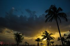 Palm Trees in the Sunset Gulf of Mexico by RedPandaProd on Etsy