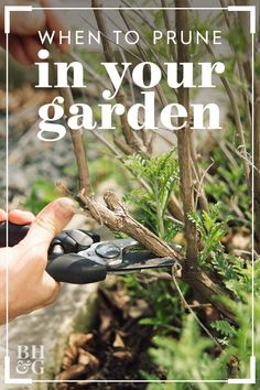 garden care yards Take the mystery out of when to prune your plants by ing our quick-and-easy guide to trimming garden favorites. Garden Care, Lush Garden, Dream Garden, Lawn And Garden, Garden Plants, Growing Vegetables, Growing Plants, Gardening For Beginners, Gardening Tips