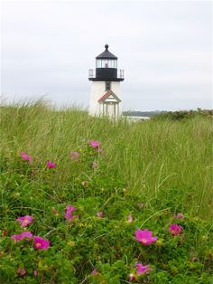Brant Point - picture - Tiffany Hedge