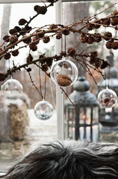 Globe terrarium hanging from branches in a vase.