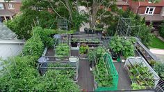 Aerial shot of sub-irrigated (SIPs) roof-top veggie garden in Toronto, Ontario, Canada. Looking south. Growing in SIP raised beds are beans, sweet peppers, swiss chard, lettuce and cucumbers. Growing in SIP planters are tomatoes and zucchini. Growing in fabric grow bags are eggplants and kale. All SIPs. July 1, 2013.