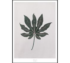 Aralia Leaf A2 Poster by Lissa Thimm Studio made in Denmark on CROWDYHOUSE  #home #decor