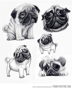 funny-cute-pug-draw-face