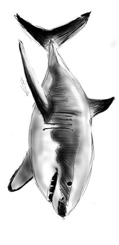 Great White Shark. Sketch by Leanne Kennedy on Samsung Galaxy Note