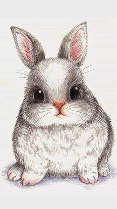 萌 兔 彩 铅 conejos bunny drawing, rabbit drawing и draw Bunny Drawing, Bunny Art, Cat Cartoon Drawing, Bunny Pics, Big Bunny, Hunny Bunny, Animal Drawings, Pencil Drawings, Animal Paintings