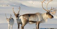Du möchtest einen unvergesslichen Aufenthalt mit Natur pur erleben? Dann entdecke das erstaunliche Norwegen!  Verbringe 3 bis 5 Nächte in zentral gelegenen Hotels in Tromso. Im Preis ab 1'039.- sind die Übernachtung, das Frühstück, einen Husky Ausflug ,einen Ausflug zu den Nordlichter, eine Motorschlittenfahrt und der Flug inbegriffen!  Hier kannst du den Ferien Deal buchen: https://www.ich-brauche-ferien.ch/ferien-deal-norwegen-mit-flug-und-hotel-fuer-1039/