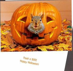 Do you have any candy with nuts you'd like to share?  Such a funny squirrel !