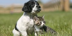 "New ""Pregnancy Vaccine"" for Pets Could Mean the End of Spaying and Neutering"