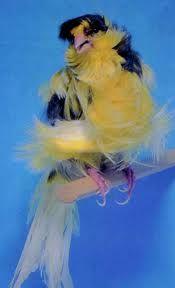 Little Birds, Love Birds, Beautiful Birds, Bee Moth, Canary Birds, Serin, Bird Wings, Finches, Big Bird
