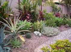 Build a healing garden with Australian native plants Outdoor Gardens, Small Front Yard, Australian Garden Design, Succulent Landscaping, Native Garden, Plants, Small Garden Front Yard, Garden Beds, Garden Inspiration