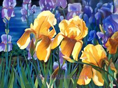 Iris Art Print  Iris Garden  Yellow Iris Art  by ArtByJulene